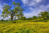 Magical Spring Afternoon at Shell Creek Road  Atascadero California