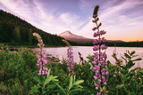 Mount Hood Wildflower View at Trillium Lake  Oregon