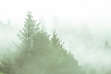 Fog Art Impressions Nature Detail