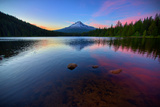 Trillium Fever  Mount Hood  Oregon