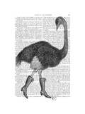 Ostrich in Boots