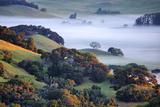 April Morning in the Petaluma Hills  Sonoma County  Northern California