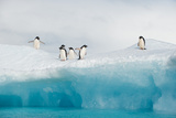 Adelie Penguins Stand on an Iceberg