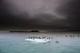 Murres Perching on an Iceberg Off Hooker Island