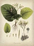 Vintage East Indian Plants I
