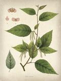 Vintage East Indian Plants III