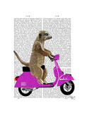 Meerkat on Pink Moped Reproduction d'art par Fab Funky