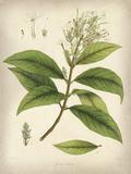 Vintage East Indian Plants IV