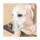 Dlynn's Dogs - Shell