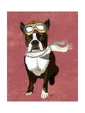 Boston Terrier Flying Ace
