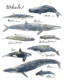 A Collection of Whales