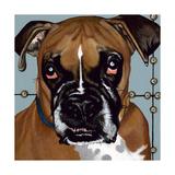Dlynn's Dogs - Rocco