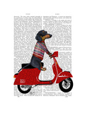 Dachshund on a Moped