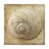 Sepia Shell VI