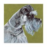 Dlynn's Dogs - Zoee