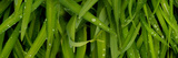 Close-Up of a Raindrops on Grass