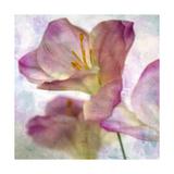 Pink Hyacinth I