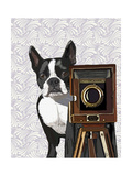 Boston Terrier Photographer Reproduction d'art par Fab Funky