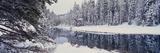 Winter Snowstorm in the Lake Tahoe Area  California