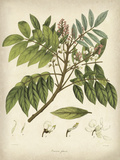 Vintage East Indian Plants II