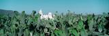 Mission San Xavier Del Bac from 1783-1797  Tucson  Arizona
