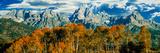 Aspen Trees in a Forest  Teton Range  Grand Teton National Park  Wyoming  Usa