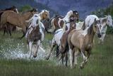 Horses Running Through a Wet Pasture
