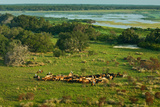 Florida Cattlemen Drive Through Pastureland Near Lake Kissimmee in the Everglades Headwaters