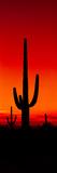 Silhouette of Saguaro Cactus at Sunset  Arizona  Usa