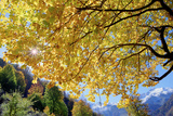A Golden Maple Tree in an Autumn Landscape in the Alborz Mountains
