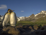 The Mountains Surrounding Gold Harbor Form a Backdrop for a Pair of King Penguins