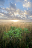 The Kissimmee Prairie at Sunrise