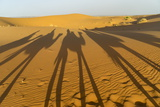 Shadows of Camels in the Erg Chebbi Sand Dunes in Southeastern Morocco