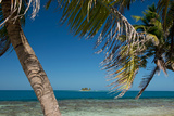 Silk Caye Island with Palm Trees  Caribbean Sea  Stann Creek District  Belize