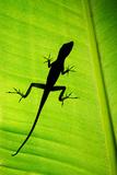 Lizard on Leaf, Sarapiqui, Costa Rica Papier Photo par Green Light Collection