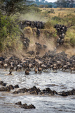 Wildebeests Crossing Mara River, Serengeti National Park, Tanzania Papier Photo par Green Light Collection