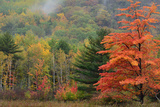 Colorful Trees and a Foggy Hillside in Acadia National Park