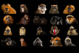 Composite Of20 Different Species of Primates
