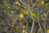 An African Green Pigeon Perched in a Tree