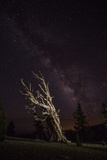 A Bristlecone Pine Tree and the Milky Way