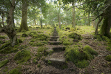 Steps Lead Up a Hill in Tomies Wood in Killarney National Park  County Kerry  Ireland