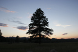 A Tree Silhouetted by the Sunset