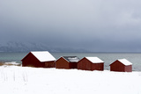 Red Houses by the Sea in a Snowy Winter Landscape