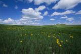 Shortgrass Prairie Landscape Below Clouds in a Blue Sky