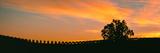 Silhouette of Vineyard at Sunset  Paso Robles  San Luis Obispo County  California  Usa