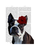 Boston Terrier with Rose on Head