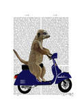 Meerkat on Dark Blue Moped