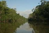 A Scenic View of a Coastal Mangrove Swamp in Northern Venezuela