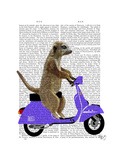 Meerkat on Lilac Moped