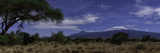 A Moonlit Night with Mount Kilimanjaro  an Acacia Tree  and Giraffes in the Background
